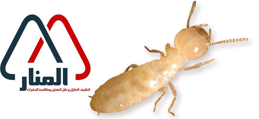 شركة مكافحة النمل الابيض ببريده