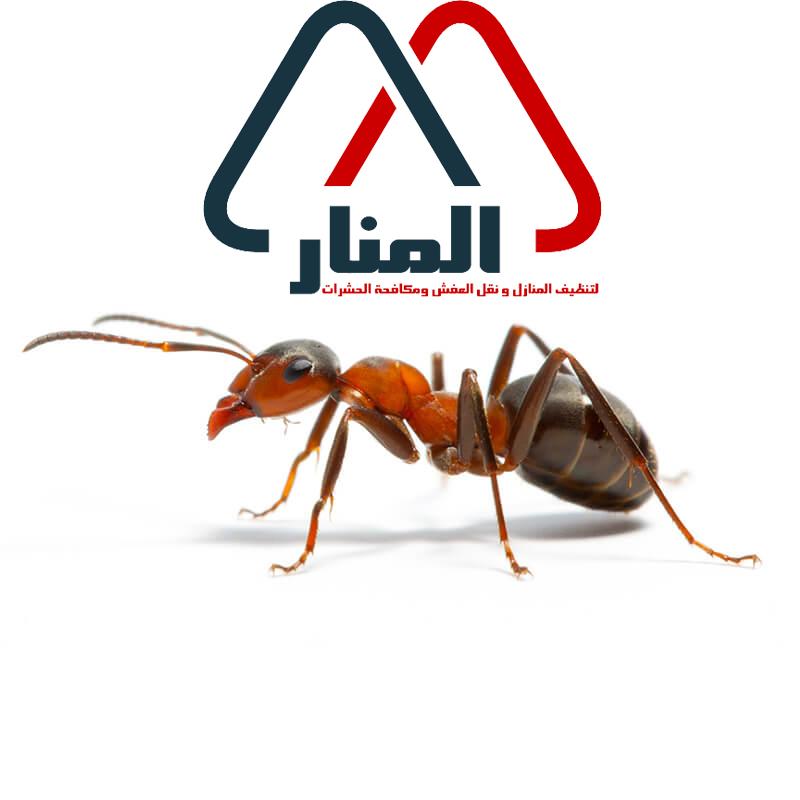 شركة مكافحة النمل الاسود بالقصيم