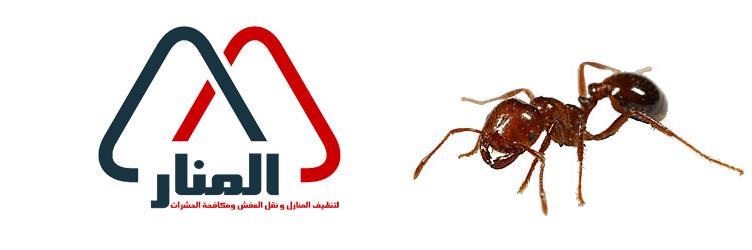 شركة مكافحة النمل الاسود ببريده