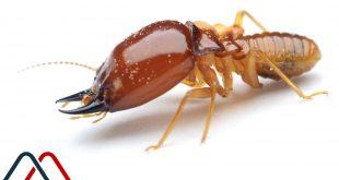 شركة مكافحة النمل الابيض بالمذنب وبالغاط