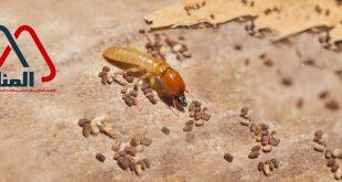 شركة مكافحة النمل الابيض بالاسياح ورياض الخبراء