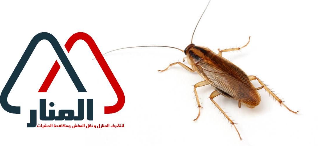 شركة مكافحة الصراصير بالمجمعه