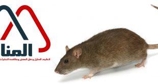 شركة مكافحة الفئران بالاسياح ورياض الخبراء