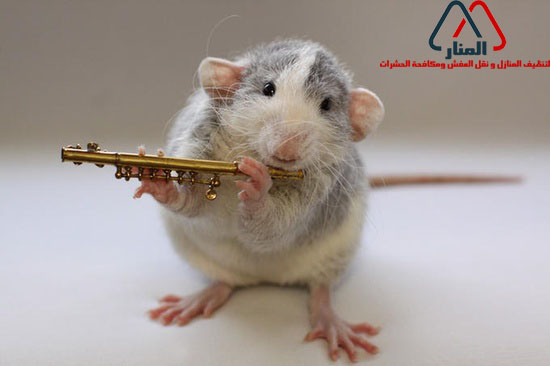 الفئران والأمراض المصاحبه لها وطرق التخلص منها