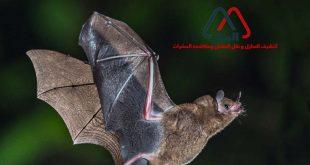 الخفافيش ونمط حياتها