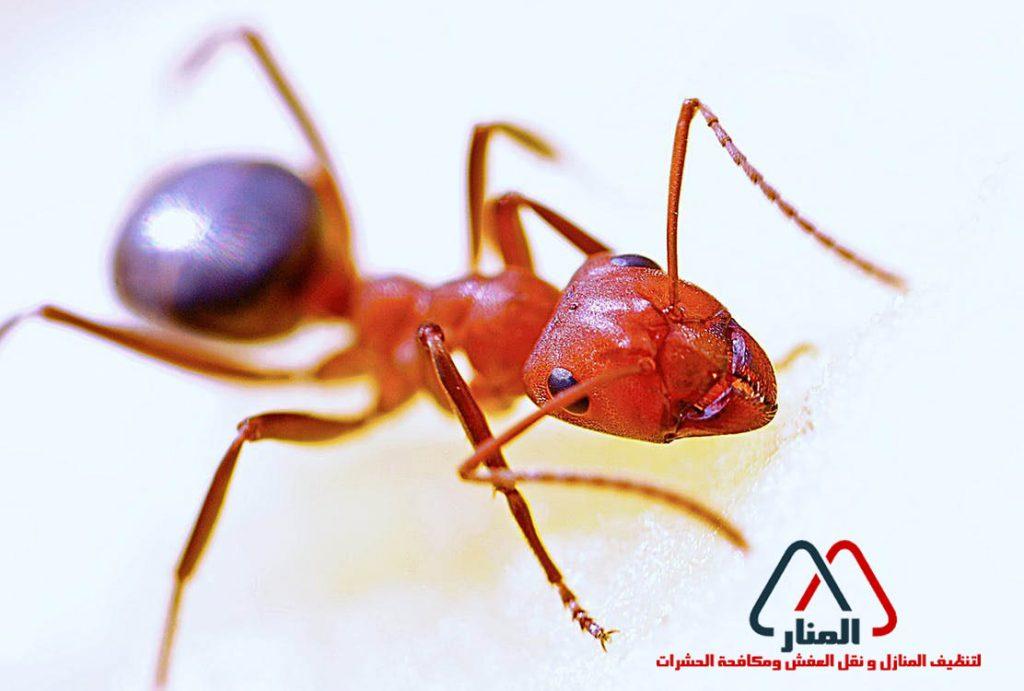تعلم من النمل