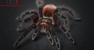 العنكبوت وأسرار حياته