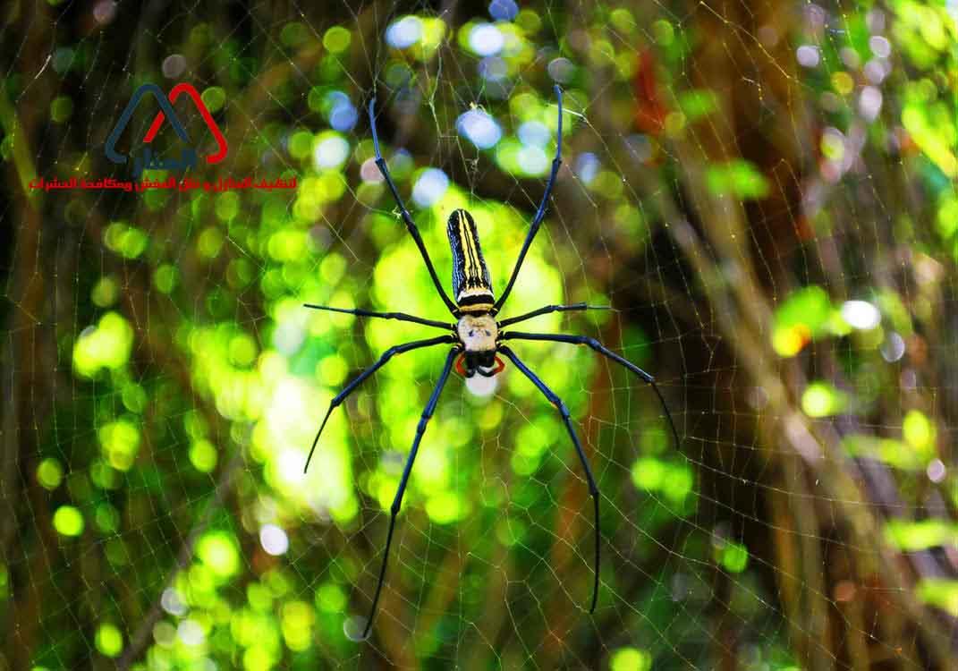 العنكبوت حيوان صديق