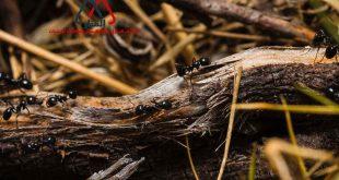 النمل أسلوب حياه