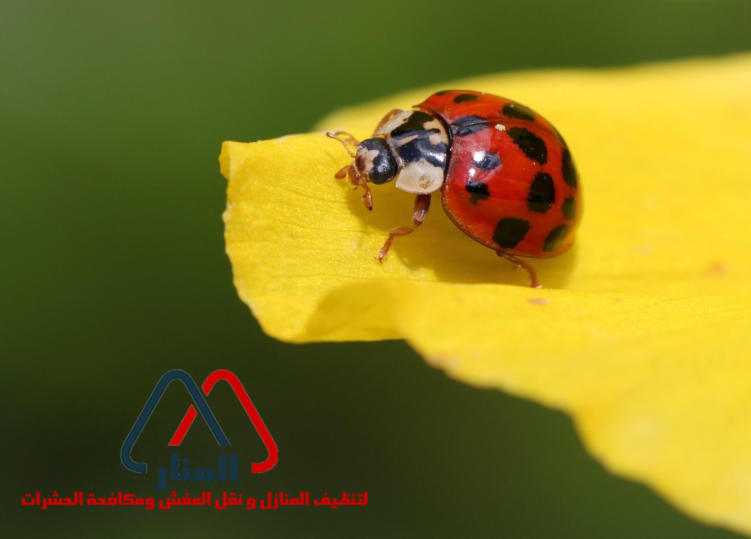 طرق الوقاية من حشرة المن