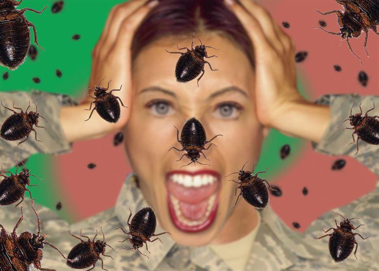 القضاء علي الحشرات نهائيا